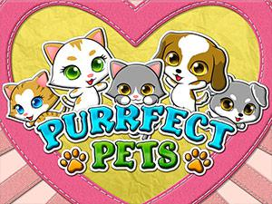 Play Purrfect Pets